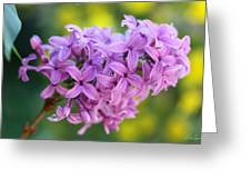 Dewdrops On Lilacs Greeting Card