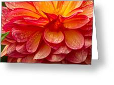 Dewey Dahlia Closeup Greeting Card