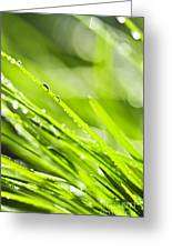 Dewy Green Grass  Greeting Card