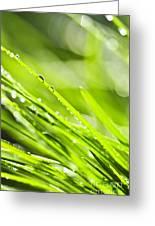 Dewy Green Grass  Greeting Card by Elena Elisseeva