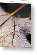 Dewy Leaf Greeting Card by Elena Elisseeva