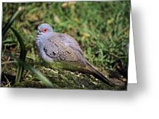 Diamond Dove Greeting Card