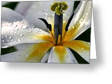 Diamond Showers Greeting Card