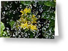 Diamond Studded Web Greeting Card