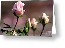 Diana Rose Greeting Card