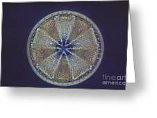 Diatom - Actinoptychus Heliopelta Greeting Card by Eric V. Grave