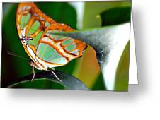 Dido Longwing Butterfly Greeting Card