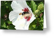 Dig In Greeting Card