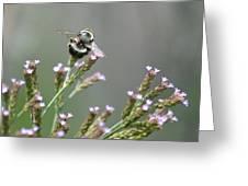Digger Bee Greeting Card