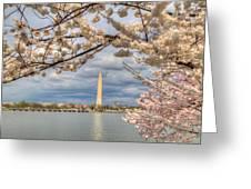 Digital Liquid - Cherry Blossoms Washington Dc 4 Greeting Card
