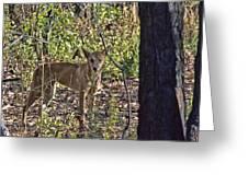 Dingo In The Wild V3 Greeting Card