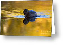 Dipping In Gold Greeting Card