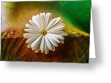 Disappearing Daisy Greeting Card