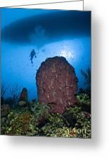 Diver And Barrel Sponge, Belize Greeting Card