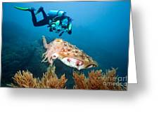 Diver And Cuttlefish Greeting Card