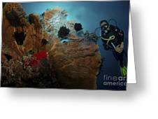 Diver And Sea Fan At Liberty Wreck Greeting Card