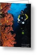 Diver And Sea Fans, Fiji Greeting Card