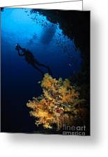 Diver And Soft Coral, Fiji Greeting Card