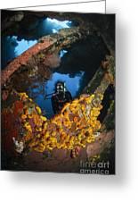 Diver Explores The Liberty Wreck, Bali Greeting Card
