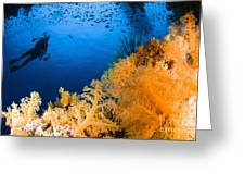 Diver Hovering Over Soft Coral Reef Greeting Card