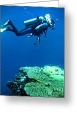 Diver In Deep Greeting Card