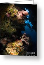 Diver In Soft Coral Seascape, Fiji Greeting Card