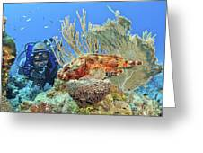 Diver Looks At Scorpionfish Greeting Card