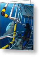 Diver Observes A Male Great White Shark Greeting Card