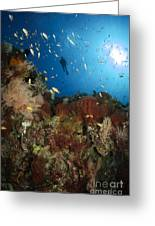 Diver Over Reef Seascape, Indonesia Greeting Card