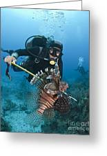 Diver Spears An Invasive Indo-pacific Greeting Card