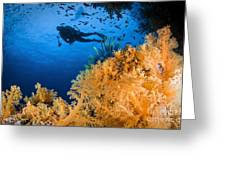Diver Swimms Above Soft Coral, Fiji Greeting Card