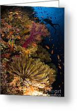 Diver Swims By Soft Corals And Crinoid Greeting Card