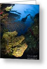 Diver Swims Over A Reef, Belize Greeting Card