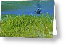 Diver With Fluorescent Green Algae Greeting Card