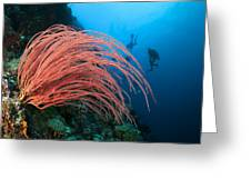 Divers And Whip Coral Greeting Card