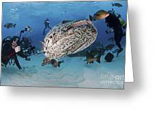 Divers Photographing A Giant Grouper Greeting Card