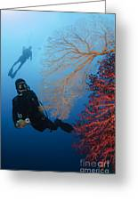 Divers Swimming By Sea Fans, Indonesia Greeting Card