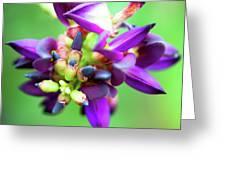 Divine Purple Greeting Card