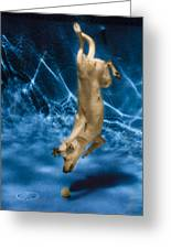 Diving Dog 2 Greeting Card