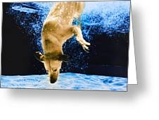 Diving Dog 3 Greeting Card