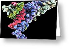 Dna Transcription Factor, Molecular Model Greeting Card by Laguna Design