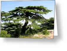 Do-00511 Cedar Forest Greeting Card