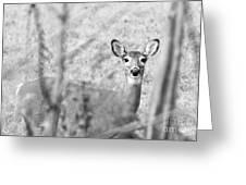 Doe A Deer. Greeting Card
