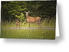 Doe And Fawn Along A Roadside Near Iron Mountain Michigan. Greeting Card