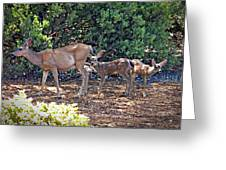 Doe And Twin Fawns Greeting Card