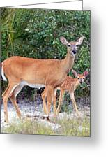 Doe With Fawn I Greeting Card
