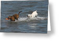Dog 105 Greeting Card