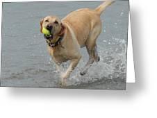 Dog 111 Greeting Card by Joyce StJames