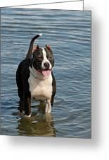 Dog 124 Greeting Card