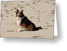 Dog 125 Greeting Card